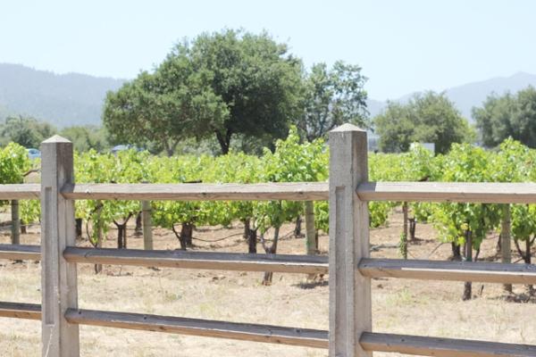 WineTasting15